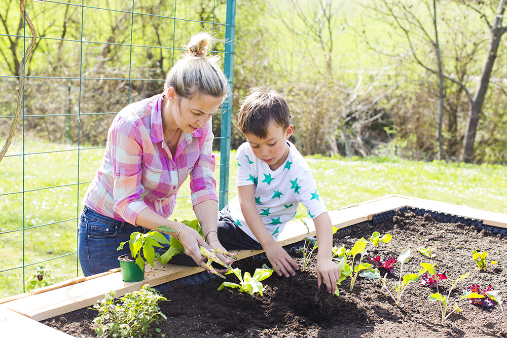 beautiful mother and her blond son planting salad in the raised bed in her garden