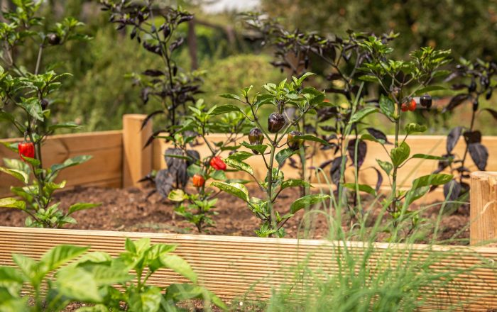 a photo of a raised bed garden